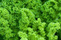 cabbage 84456 1280